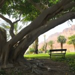 Kibbutz_Ein-Gedi
