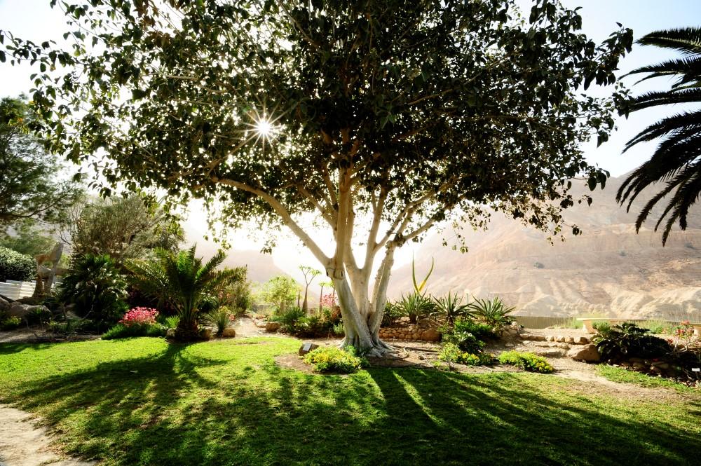 ein_gedi_botanic_garden