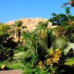 ein_gedi_botanic_garden1