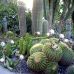 ein_gedi_botanic_garden2