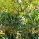ein_gedi_botanic_garden5